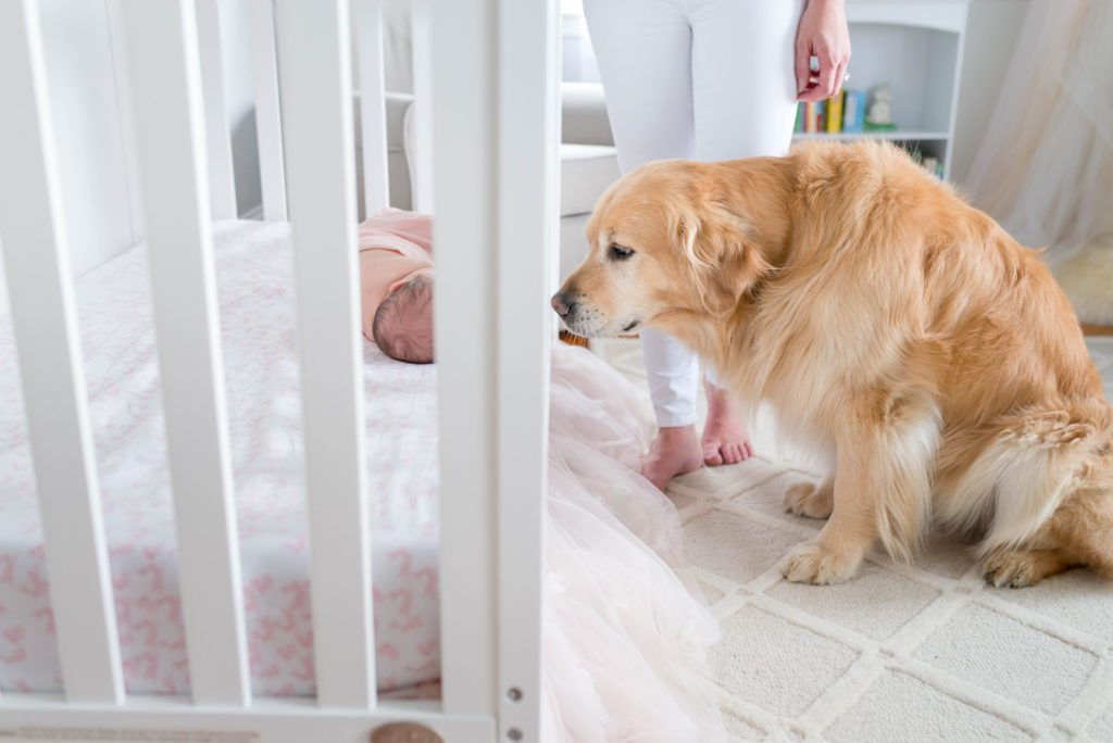 Pup with Newborn in nursery and crib | newborn photos at home