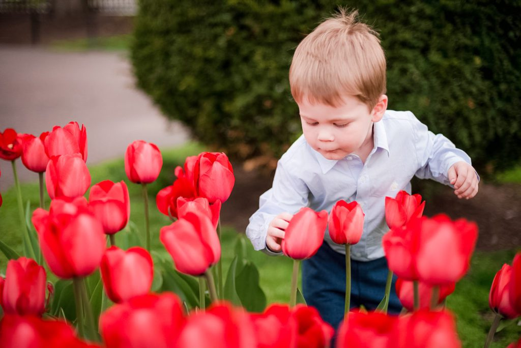 tulips are in bloom at the Boston Public Garden